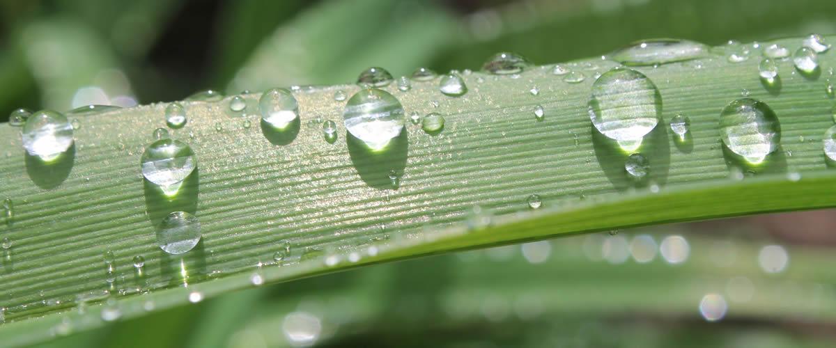 regenwater recupereren